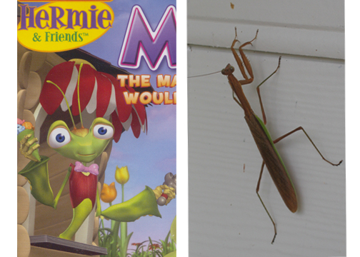 Milo or a real mantis. . .which do you prefer?
