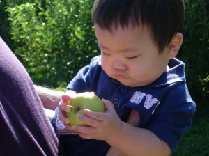 First trip to an apple orchard: I wonder if this thing will fit in my mouth?